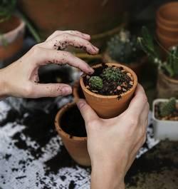 geld verdienen met planten