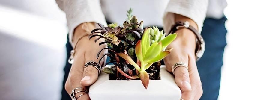 Twee handen die een pot met planten vasthouden
